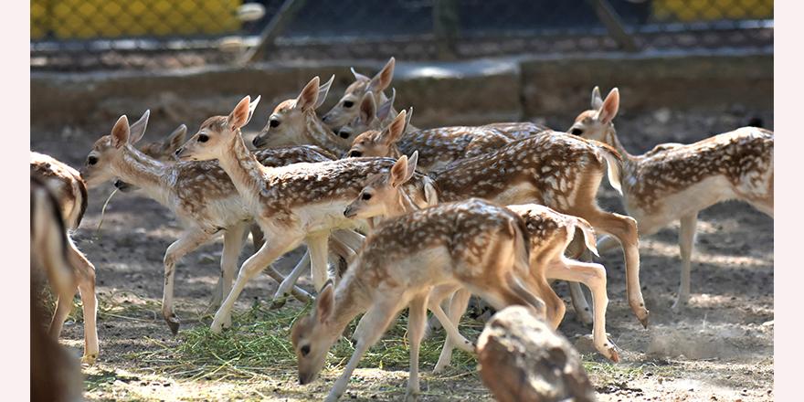 Hayvanat bahçesi yavrularla şenlendi