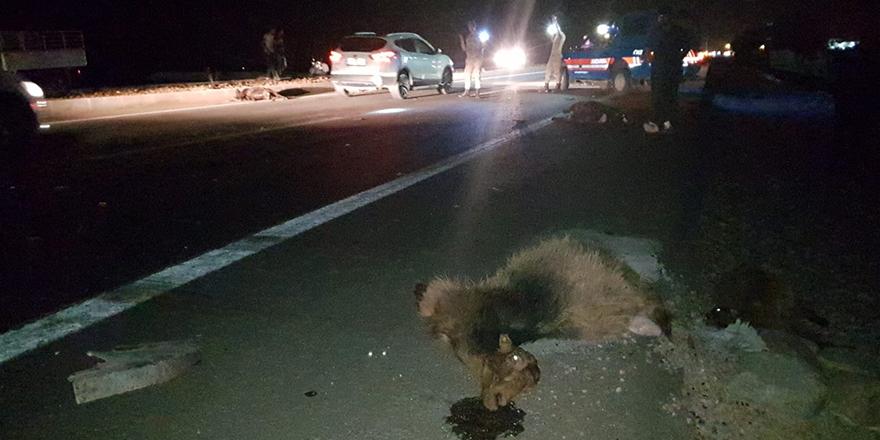 Kazada hayvanlar telef oldu
