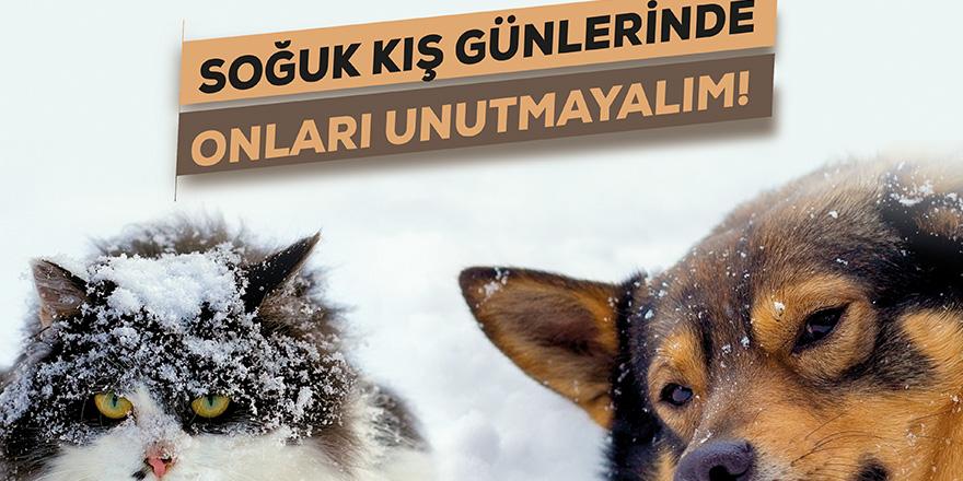 Sokak hayvanları için kampanya