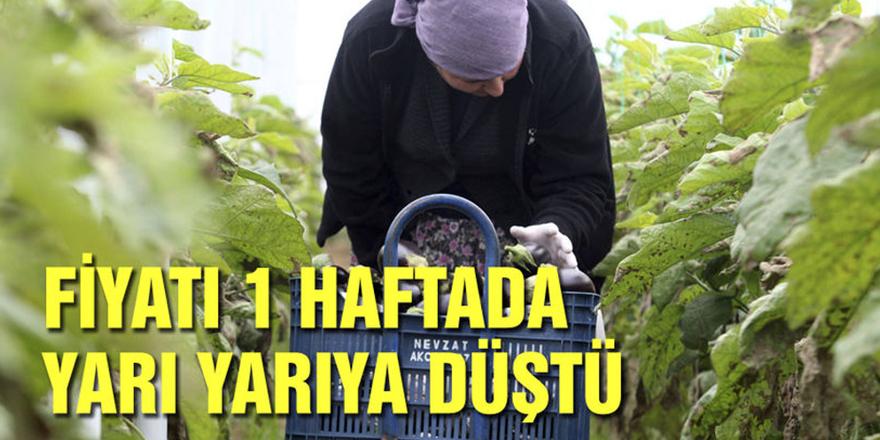 Patlıcanın fiyatı 1 haftada yarı yarıya düştü