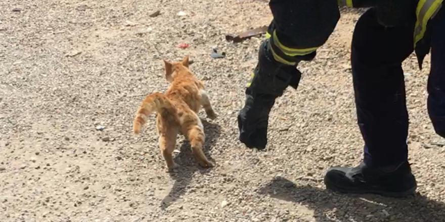 Kediyi itfaiye ekipleri kurtardı