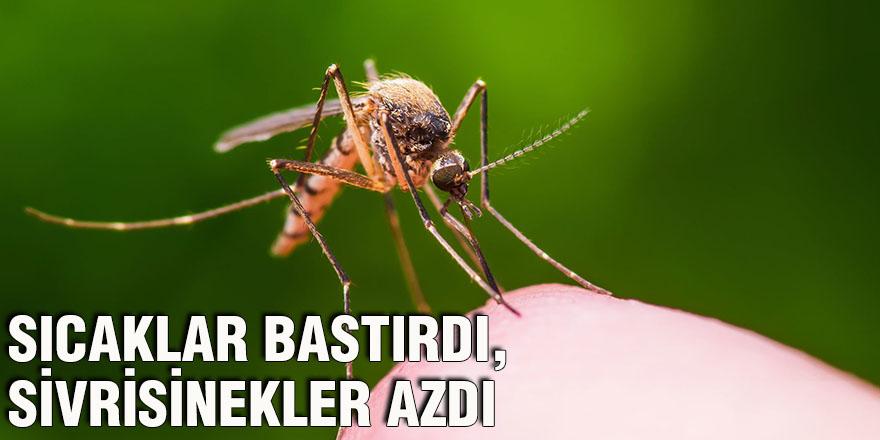 Sıcaklar bastırdı, sivrisinekler azdı