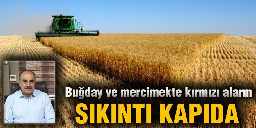 Buğday ve mercimekte kırmızı alarm