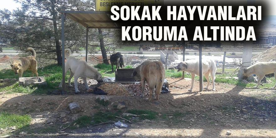 Sokak hayvanları koruma altında