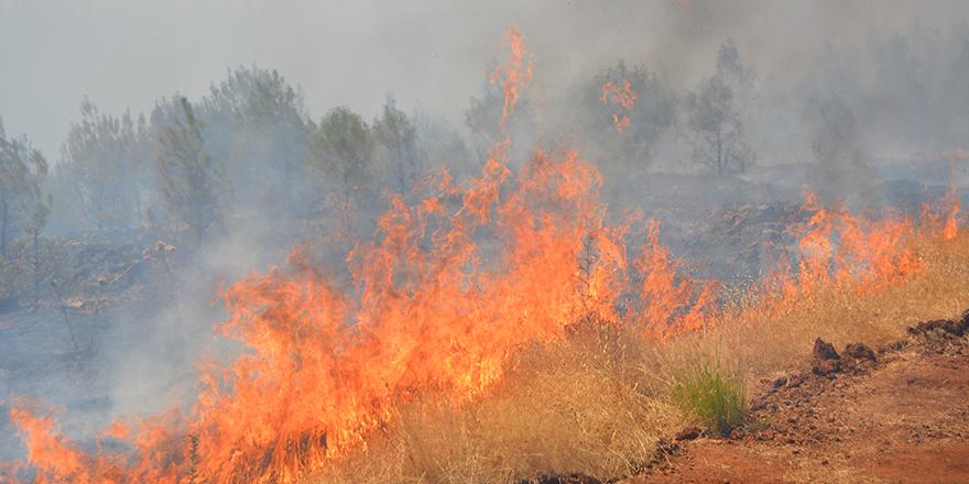20 hektar alan yandı