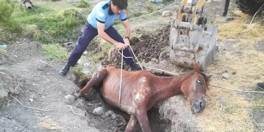 Sahipsiz atı itfaiye kurtardı