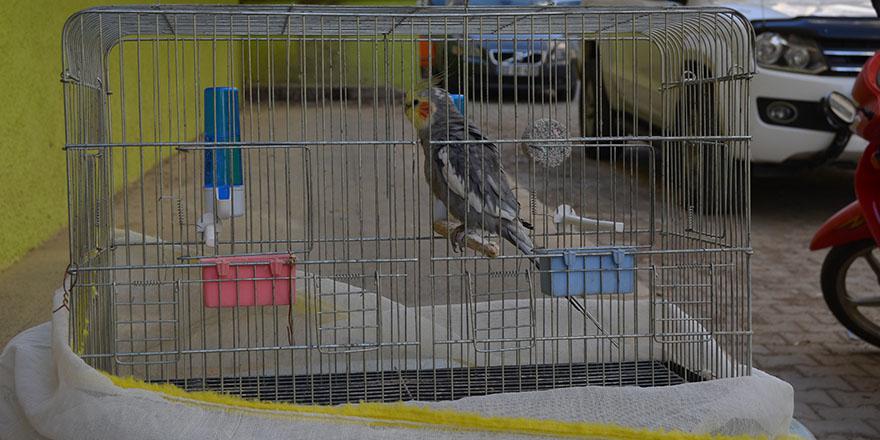 Kayıp papağan bulundu