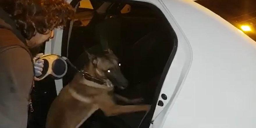 Uyuşturucuyu narkotik köpeği buldu