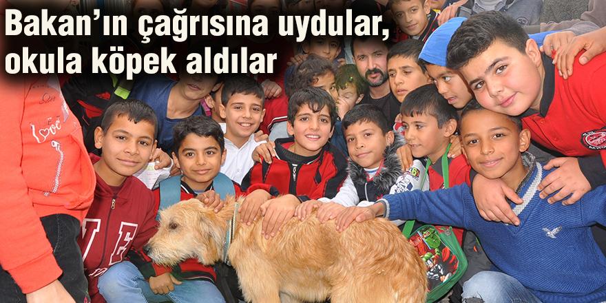 Bakan'ın çağrısına uydular, okula köpek aldılar