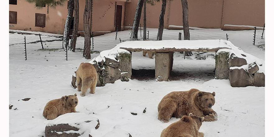 Ayıların kar keyfi