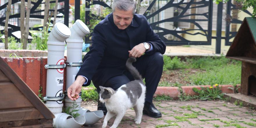Şahinbey sokak hayvanlarını unutmadı
