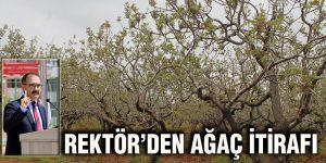 Rektör'den ağaç itirafı