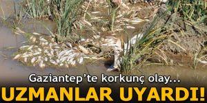 Gaziantep'teki çayda toplu balık ölümleri