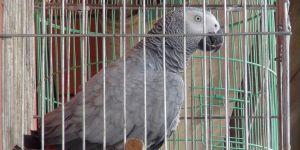 Böyle papağan görülmedi
