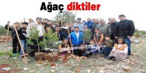 Ağaç diktiler
