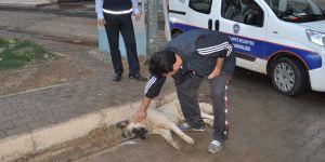Zehirlenen köpek kurtarılamadı