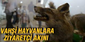 Vahşi hayvanlara ziyaretçi akını