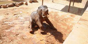 Filler serinlemenin yolunu buldu