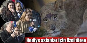 Hediye aslanlar için özel tören