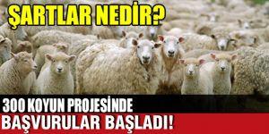300 koyun desteği başvuruları başladı