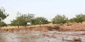 Gaziantep çiftçisi çok bahtsız