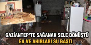 Gaziantep'te sağanak sele dönüştü ev ve ahırları su bastı