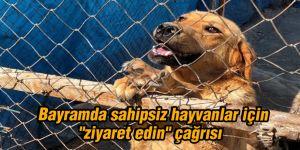 """Bayramda sahipsiz hayvanlar için  """"ziyaret edin"""" çağrısı"""