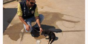 Yaralı köpeğe şefkat eli