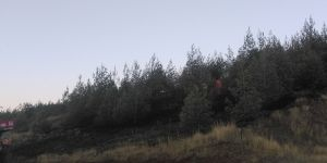 10 hektarlık alan yandı