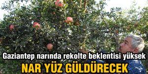 Gaziantep narında rekolte beklentisi yüksek