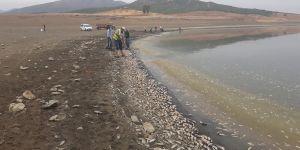 Ölü balıklar, toplanarak gömüldü