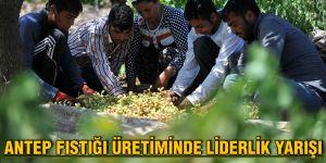 Antep fıstığı üretiminde liderlik yarışı