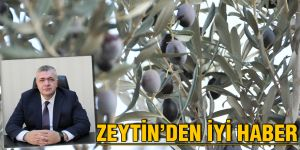 Zeytin'den iyi haber