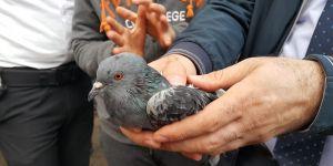 Güvercini itfaiye kurtardı