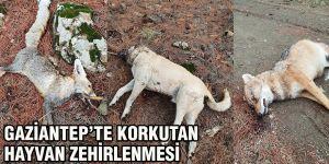Gaziantep'te korkutan hayvan zehirlenmesi