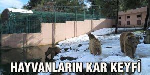 Hayvanların kar keyfi