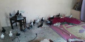 Güvercin çalmışlar