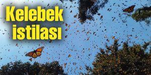 Kelebek istilası