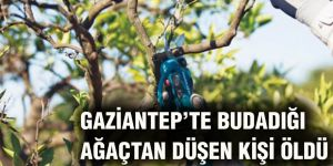 Gaziantep'te budadığı ağaçtan düşen kişi öldü