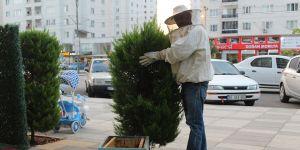 Akkent'te arı istilası