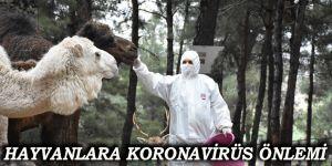 Hayvanlara koronavirüs önlemi