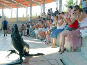 Fok balığının muhteşem hareketleri