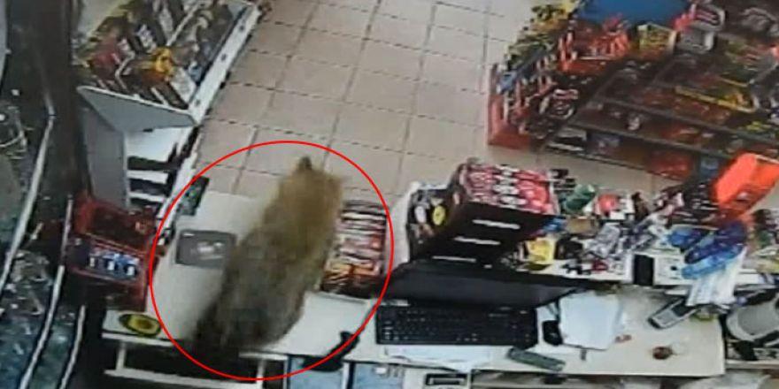 Markete girdi, müşteriler gözlerine inanamadı!.. İşte o anlar!
