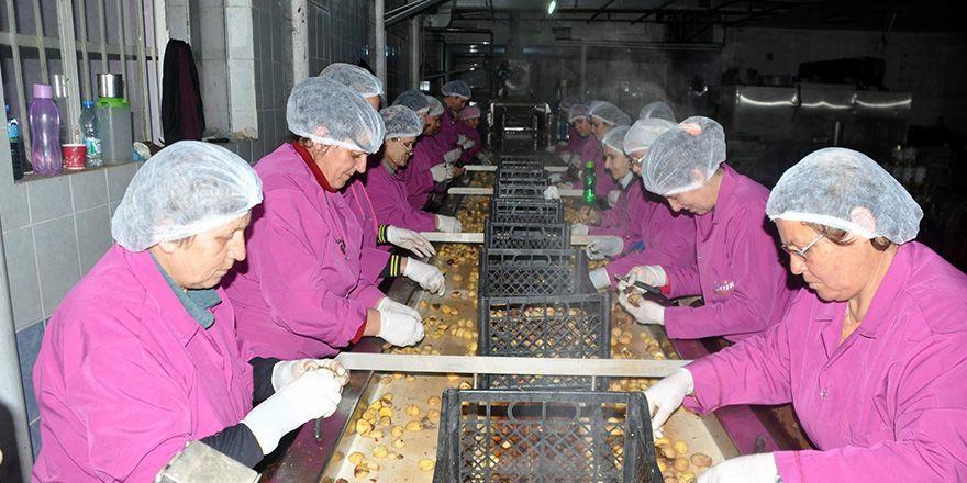 Teknolojiyi kullanarak kestane şekeri üretimini 6 kat artırdı