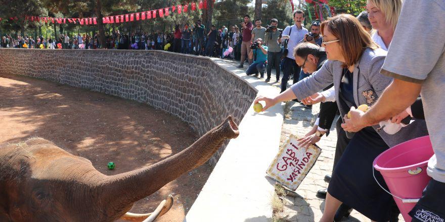 Tüp bebek fil için doğum günü sürprizi