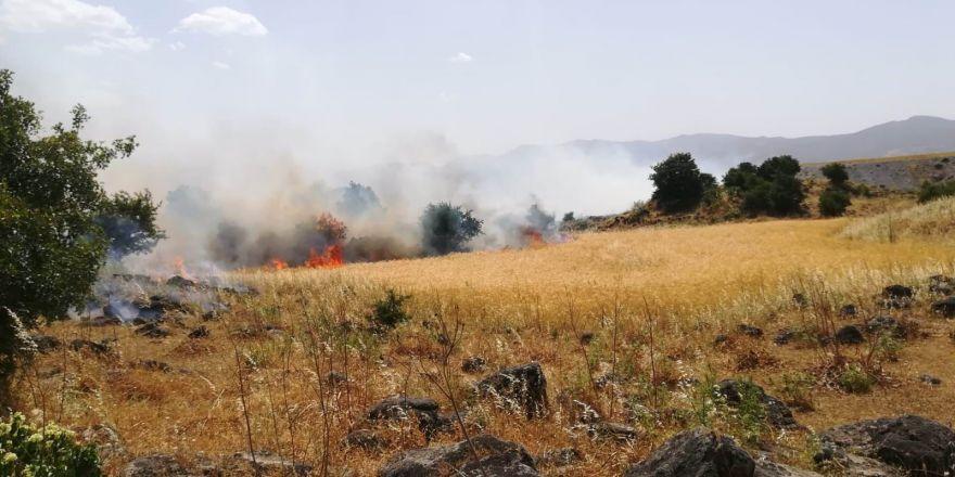Gaziantep'te 250 dönümlük ekili alan kül oldu