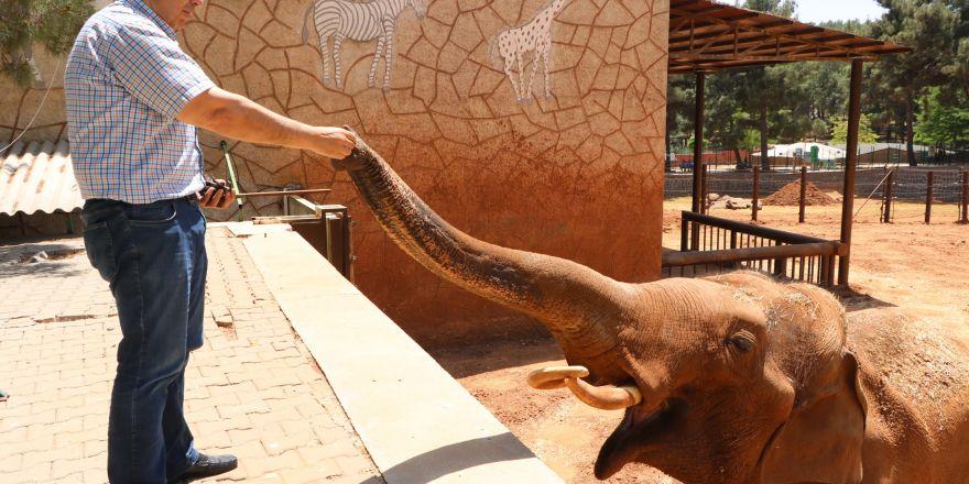 5 tonluk fillere bayram bakımı
